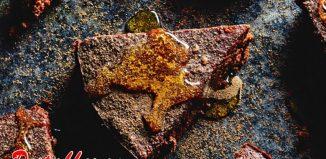 Healthy Recipe Flour-less Chocolate And Orange Cake